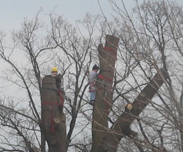 alpinista 5